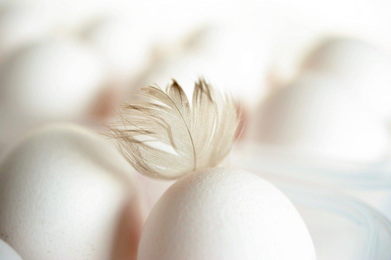 œufs en boîte Je parie que vous avez déjà des oeufs au frigo !
