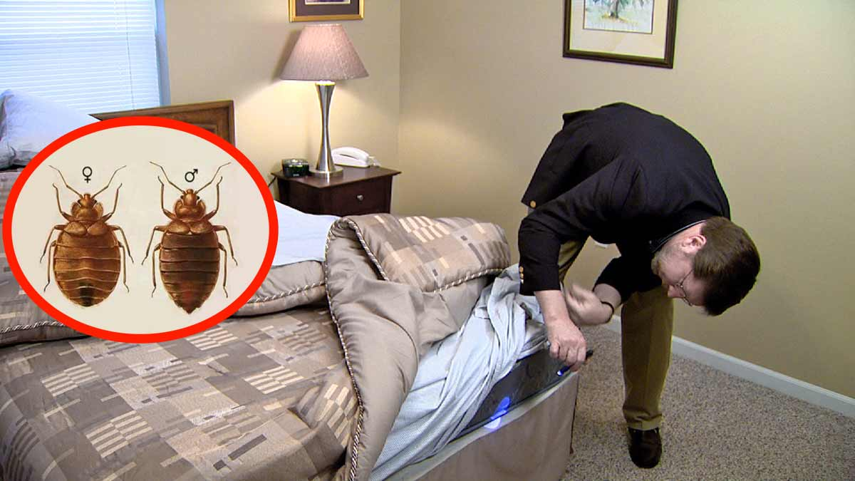 que chercher pour trouver présence punaises de lit dans chambre d'hôtel ?